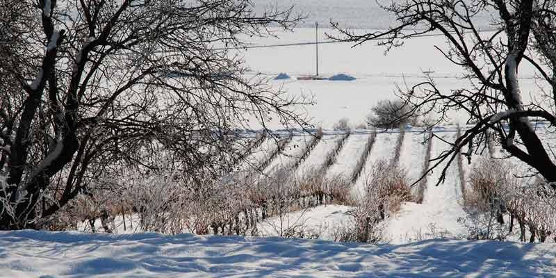 nieve)