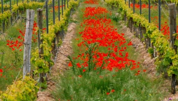 vino y flores