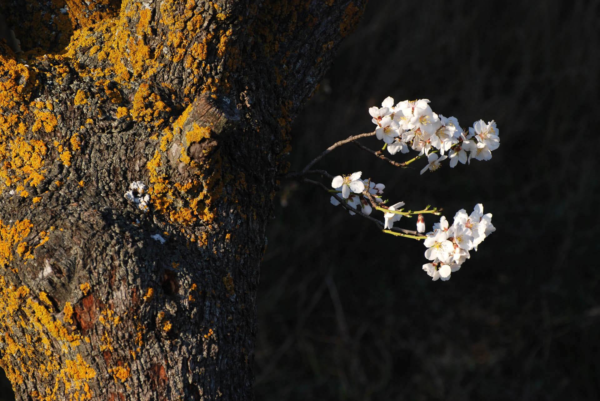 Flora de nuestros viñedos