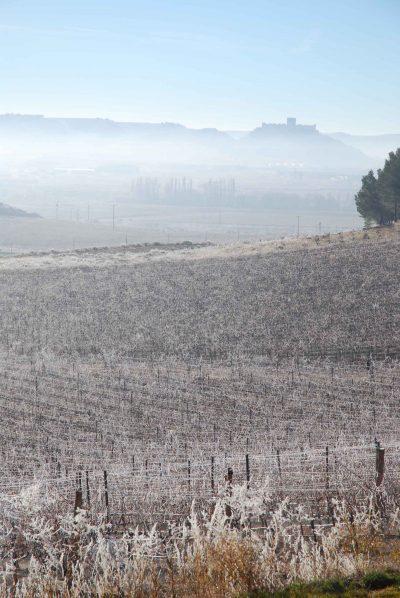 Invierno en Bodegas Comenge
