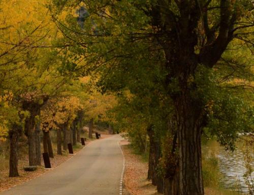 Bodegas en la Ribera del Duero, el enoturismo más interesante