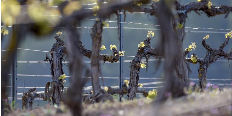 Foto-nuevas-plantaciones-01
