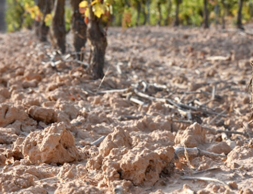 Los suelos de las parcelas de Bodegas Comenge