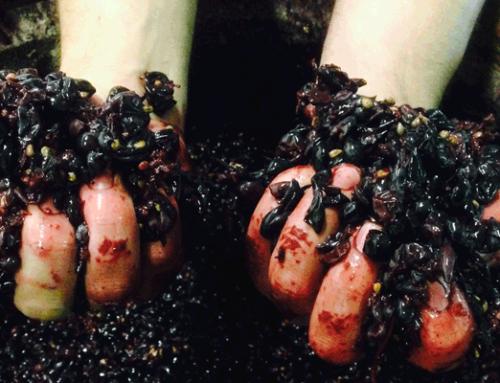 La fermentación alcohólica de los vinos