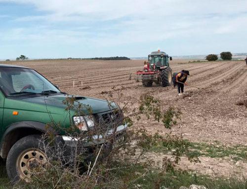 Nueva plantación de viñedo en Canalejas