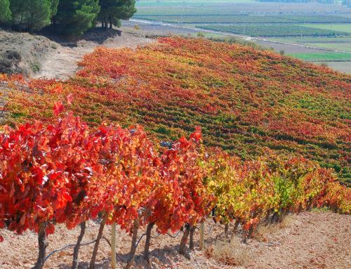 ¿Cómo se formó la Ribera del Duero?