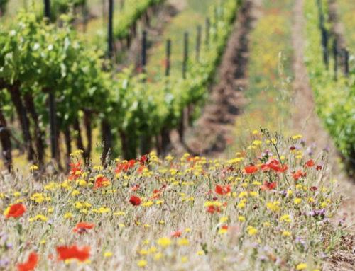 ¿Qué es un vino ecológico?