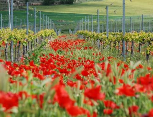 Los vinos de la primavera