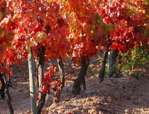 5 planes en la Ribera del Duero y 5 vinos de Bodegas Comenge